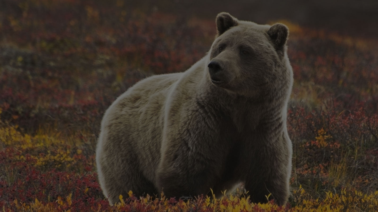 <h4>THE PAW AND FIN CONSERVATION ACT</h4><h5>We're working to pass the PAW and FIN Conservation Act, legislation that would undo the Trump administration's executive order weakening the Endangered Species Act.</h5><em>NancyS via Shutterstock.com</em>